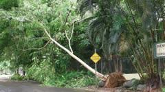 25p Hurricane Irene Aftermath-14 - stock footage