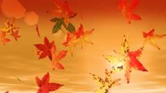 Autumn leaves falling (hd loop) Stock Footage