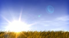 Summertime field of grass and sunset Stock Footage