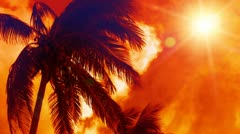 Tropical Palm Trees Paradise Stock Footage