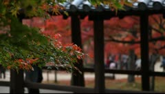Autumnal leaves in Japan Stock Footage