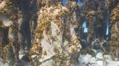 Underwater Museum II, Cancun & Isla Mujeres,MX Stock Footage