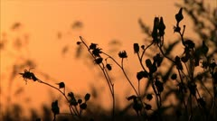 Meadow at sunset 2 Stock Footage