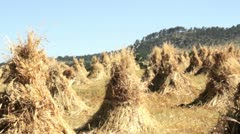 Haystacks at the feet of Volcan Toluca, Mexico Stock Footage