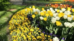 tulips in a public park with water fountains in background - stock footage