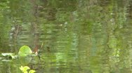 Green ripples & reflections Stock Footage