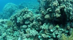 Underwater deep view Stock Footage