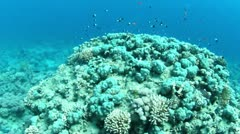 Underwater reef view Stock Footage