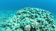 Stock Video Footage of Underwater reef view