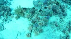 Barrels of oil underwater Stock Footage