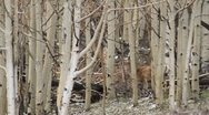 Deer 001 1080p 30fps Stock Footage