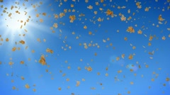 Defoliation on the background of sunny sky. Stock Footage
