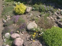 Many plants with names on tables in botanical garden. Stock Footage