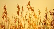 Sunrise Marsh Stock Footage