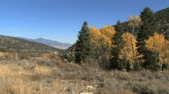 Nevada Great Basin NP aspen and conifers Stock Footage