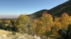 Nevada Great Basin National Park aspen and view Stock Footage