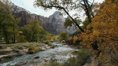 Zion Virgin River overhanging trees Stock Footage