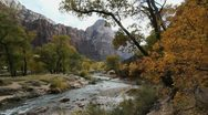Stock Video Footage of Zion Virgin River overhanging trees