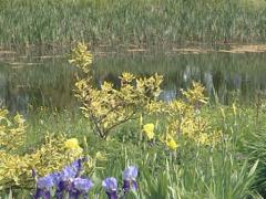 Little pond surrounded by water flora in botanical garden. Stock Footage