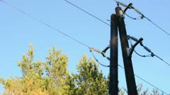 Old power pole, trees and sky background Stock Footage