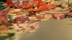 Autumn leaves float on the surface of the water. Stock Footage