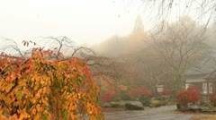 Misty Morning. In the vicinity of a Buddhist temple. Stock Footage