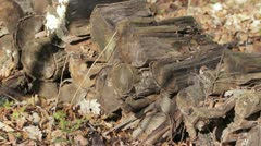 Pile of Firewood in Forest - Gentle Breeze Stock Footage