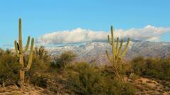 Smoking Saguaro Cloud Time Lapse Stock Footage