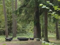 Rest area in coniferous forest. Empty benches wait for tourists. Stock Footage