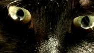 Animal Eye,sinister cat eyes . Stock Footage