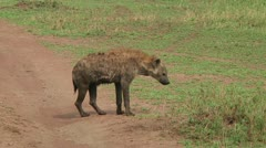 Spotted hyena Stock Footage