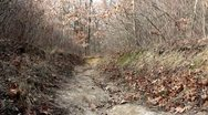 Wild trail path in the woods Stock Footage