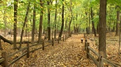 Walking through trail in time lapse Stock Footage