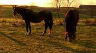 Sunset with horses Stock Footage