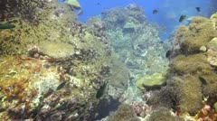 Coral reef drift lots of small fish Stock Footage