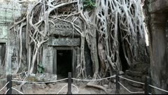 Ta Prohm_LDA N 00661 Stock Footage