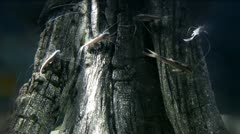 Fish on tree Stock Footage