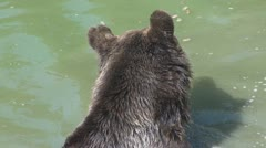 Cute Brown Bear Stock Footage