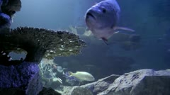 Salt water fish Stock Footage
