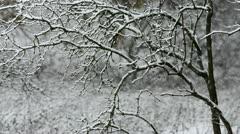 Winter snow falling through tree Stock Footage