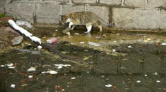 Cat playing in pool side,dead fish in pollution water. Stock Footage