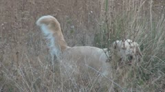 Dog alone in the prairie Stock Footage