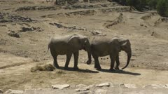South African Elephants Stock Footage