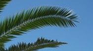 Palm tree branch Stock Footage