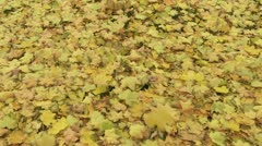 Stock Video Footage of Autumn Leaves 01