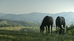 Horse couple grazing Stock Footage