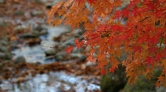 Autumn twig with creek in the background. Stock Footage