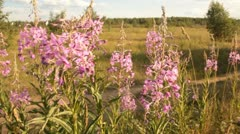 Wild flowers and the bees Stock Footage