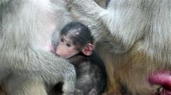 Baby Monkey Stock Footage