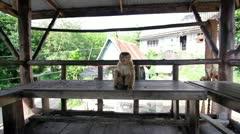 Funny monkey Stock Footage